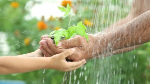 importance of rain water